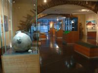 MUSEUM OF REGIONAL PREHISTORY OF SAINT-PONS-DE-THOMIERES